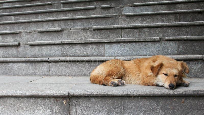 躺下在台阶的狗 库存图片