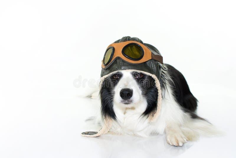 躺下在地板的可爱的博德牧羊犬狗佩带飞行员H 免版税图库摄影
