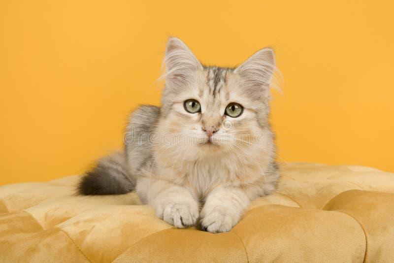 躺下在蒲团的逗人喜爱的西伯利亚小猫看在黄色背景的照相机在一个水平的图象 免版税库存图片