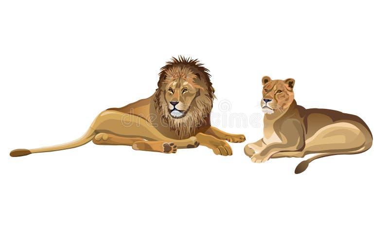 躺下配对的狮子 皇族释放例证