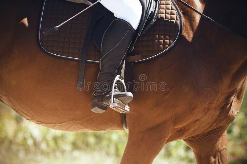 车手坐横跨一匹棕色马,投入他的腿在马镫的黑起动 库存照片