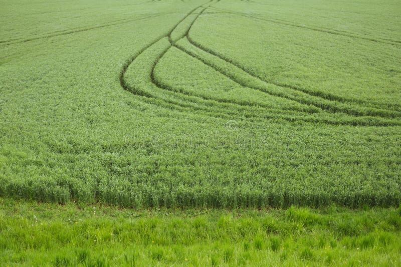 轨道和足迹在领域和草甸 免版税库存图片