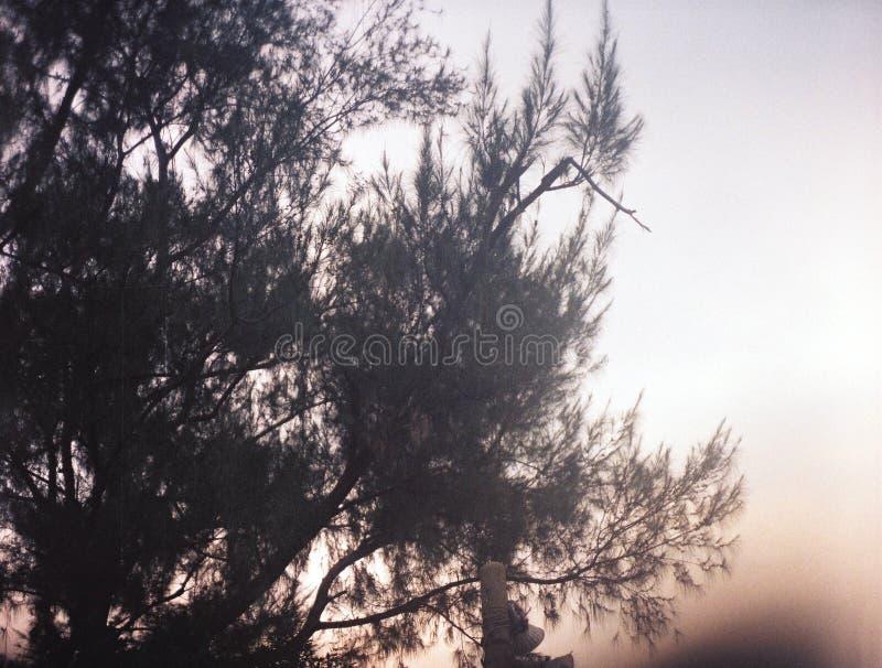 转动的树 免版税库存照片