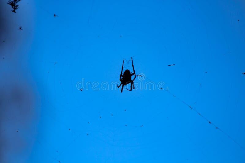 转动网的现出轮廓的蜘蛛 图库摄影