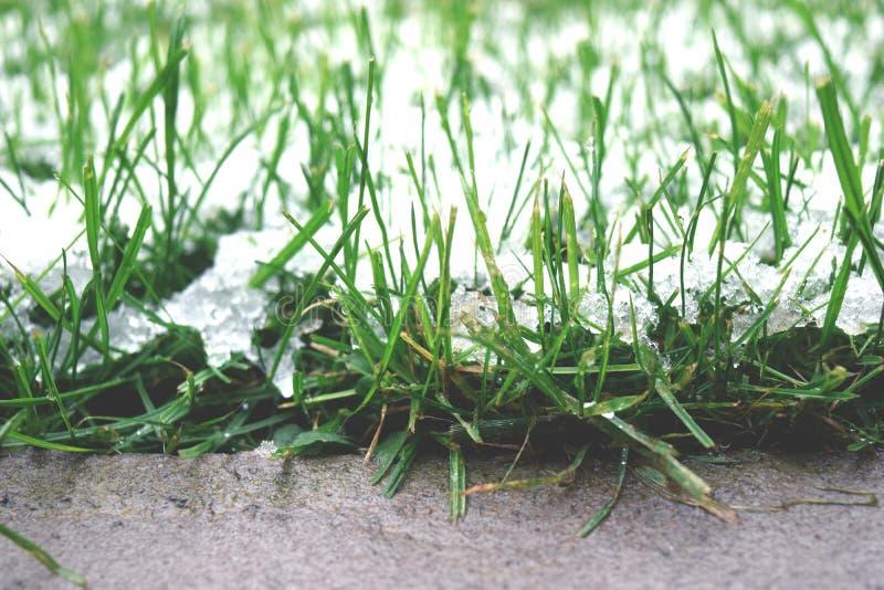 转折从秋天到冬天 在绿色草坪草的白色霜冰晶在早晨 免版税库存图片