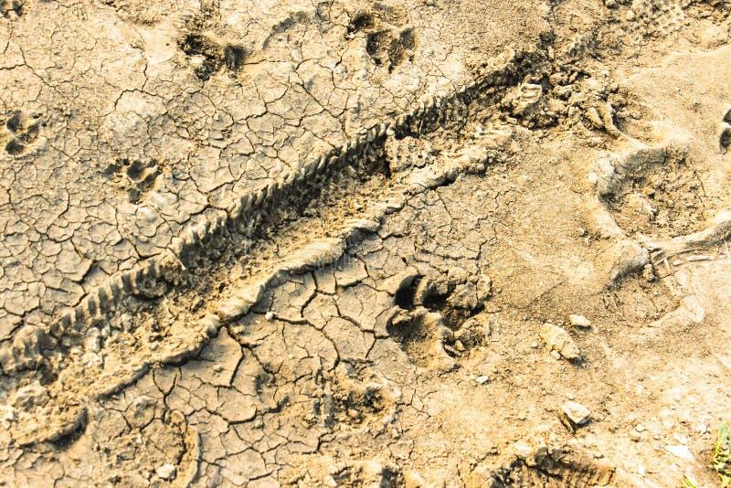 轮子和狗踪影在地面上 库存图片
