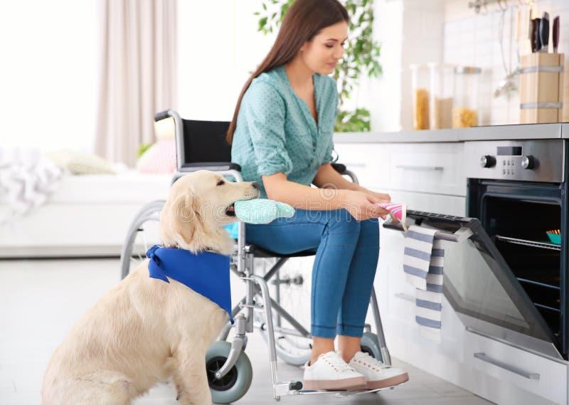 轮椅的妇女烹调与服务狗的 免版税库存照片