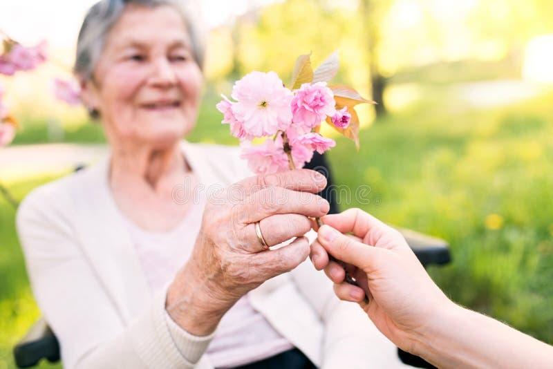 轮椅的年长祖母有春天自然的孙女的 免版税库存图片