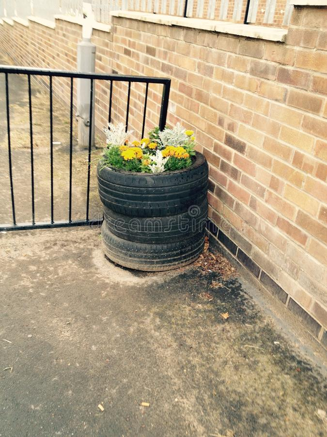 轮胎在夏时的植物罐 免版税库存照片