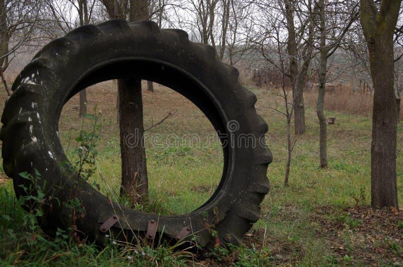 轮胎巨人  库存图片
