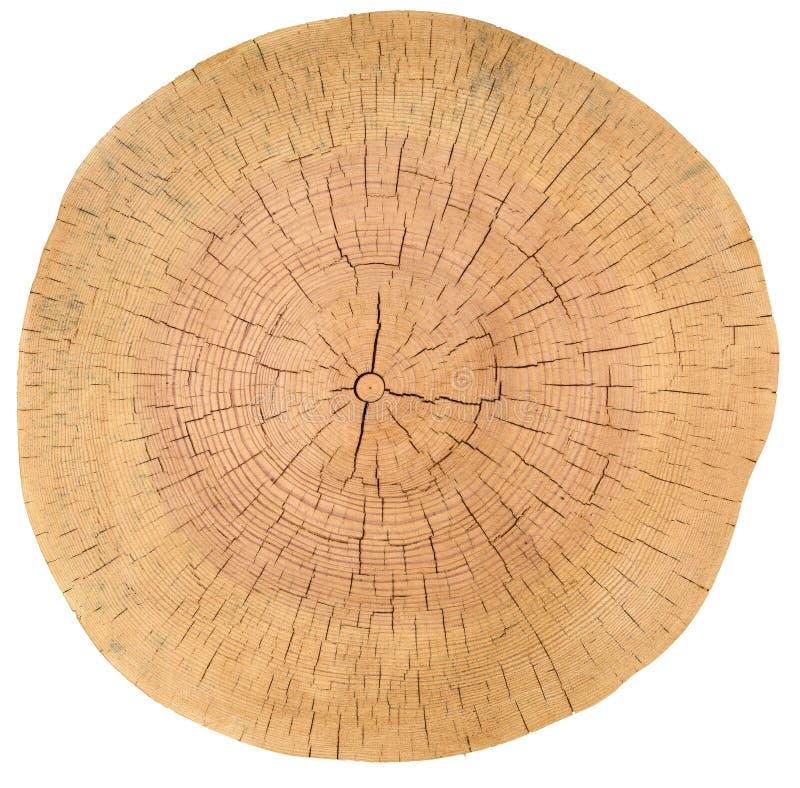 年轮,木头,日志 木纹理 库存照片