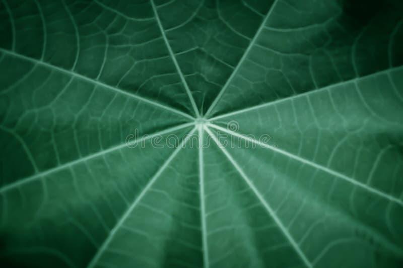 软性和迷离聚焦绿色叶子纹理背景 图库摄影