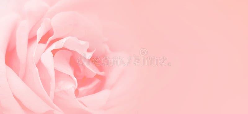 软性桃红色上升了背景 文本文字的空间 库存照片