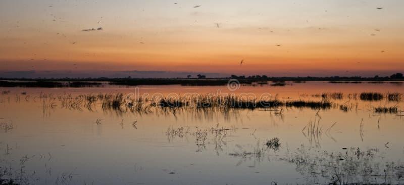 软性看法在日落以后的焕发颜色的在CHOBE河的 库存图片