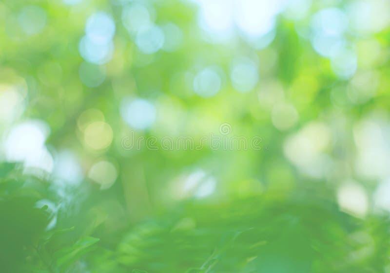 软性被弄脏的绿色留下背景 免版税库存照片