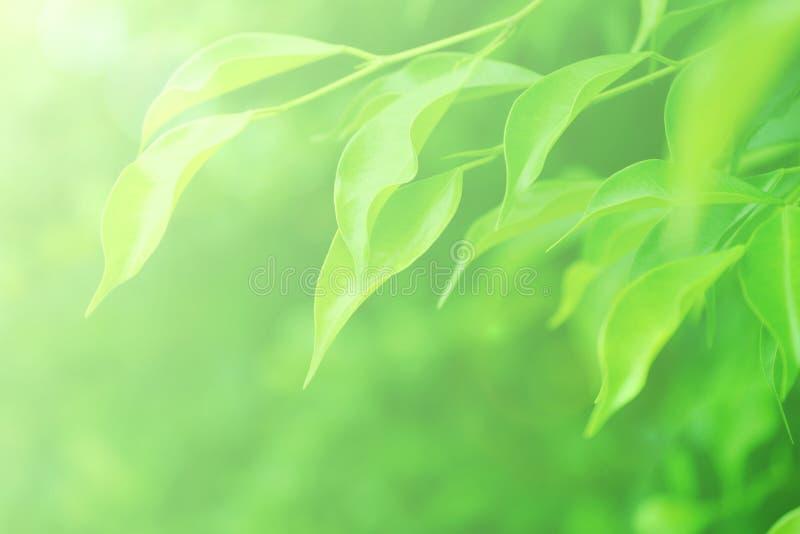 软性被弄脏的绿色留下背景 免版税图库摄影