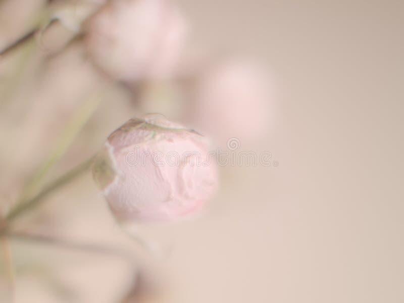 软的与玫瑰花瓣的迷离淡色背景文本和问候的 免版税库存图片