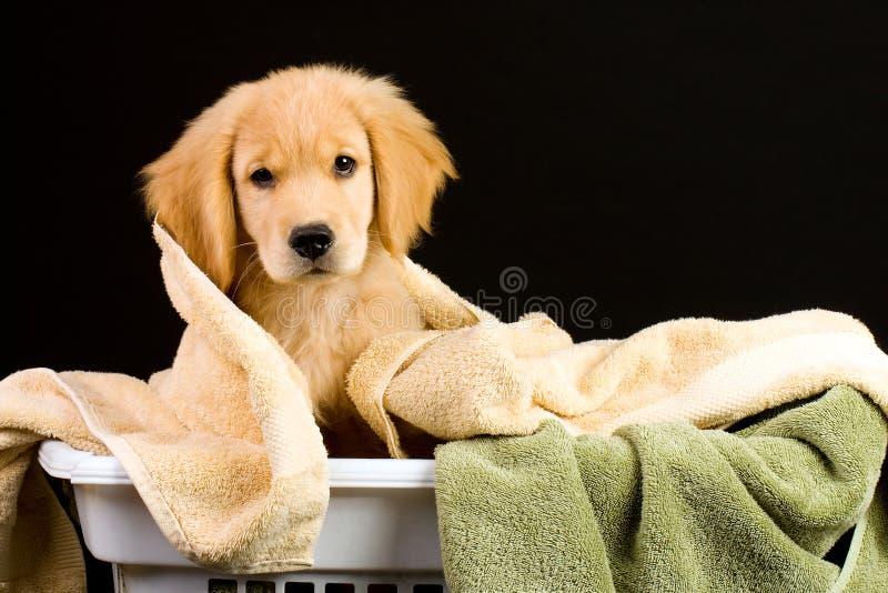 软的小狗 库存图片
