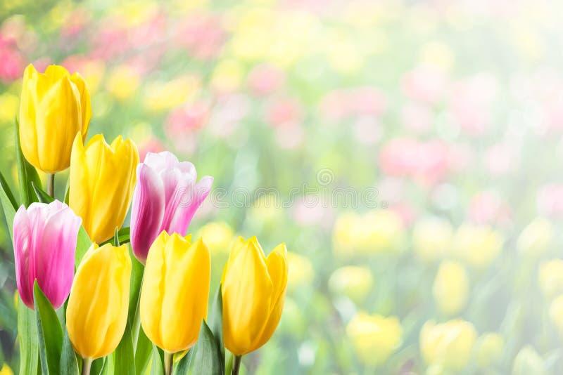 软的春天花卉背景 库存图片