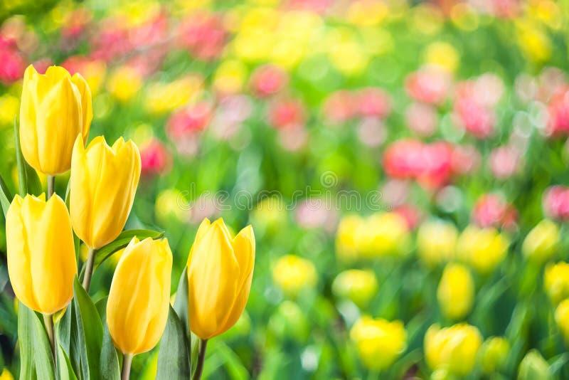 软的春天花卉背景 免版税库存图片