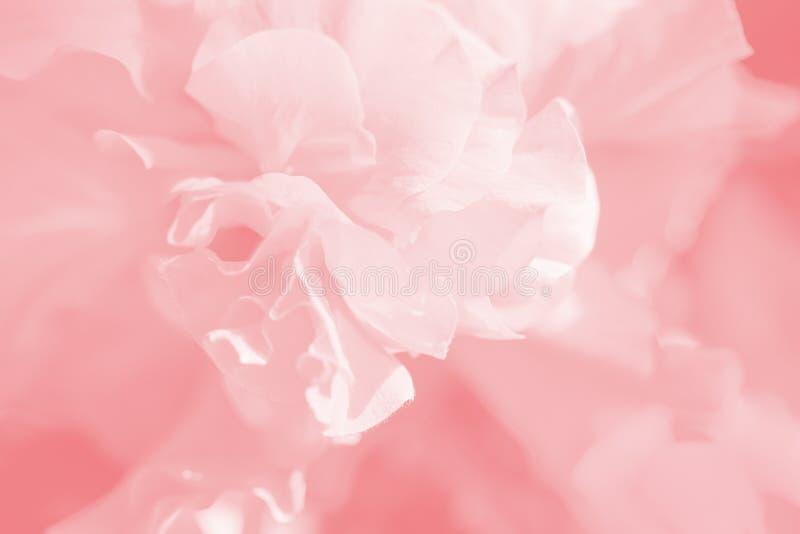 软的柔和的宏观花背景 在软的甜口气的被弄脏的艺术性的图象 库存照片