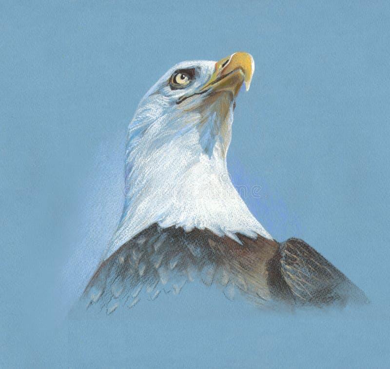 软的柔和的淡色彩老鹰 库存图片