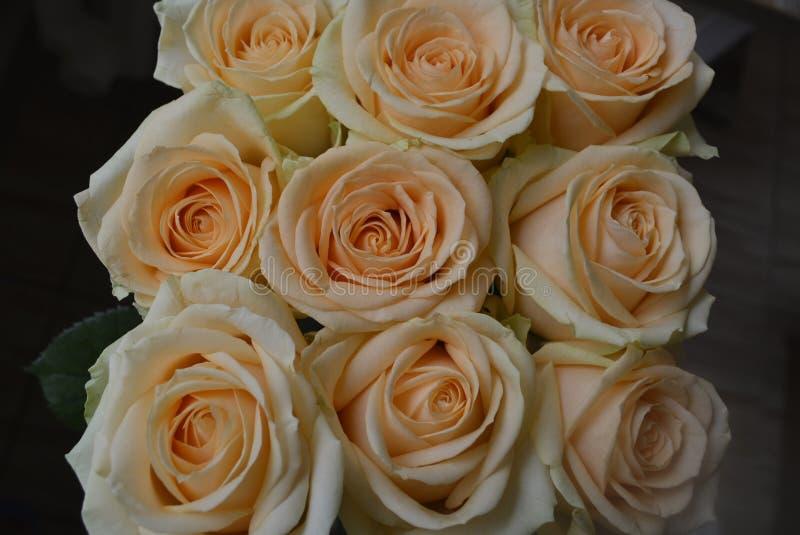 软的桔黄色玫瑰背景 库存图片