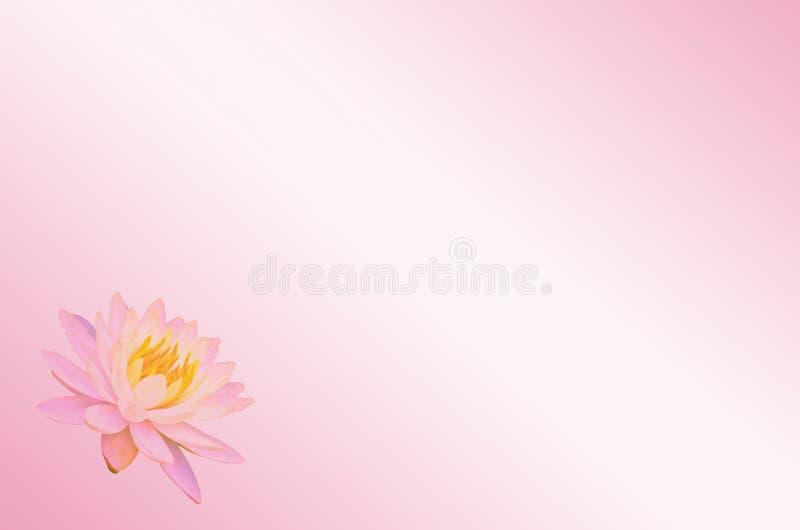 软的焦点莲花或荷花花在桃红色淡色抽象背景 皇族释放例证