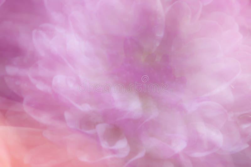 软的焦点雏菊背景 图库摄影