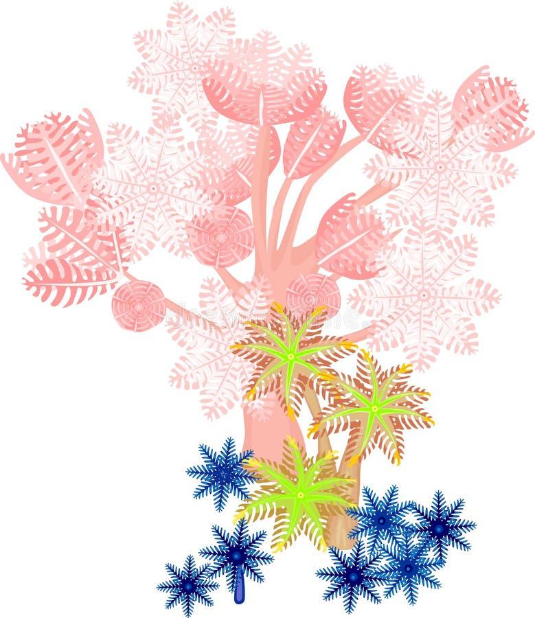 软的珊瑚 向量例证