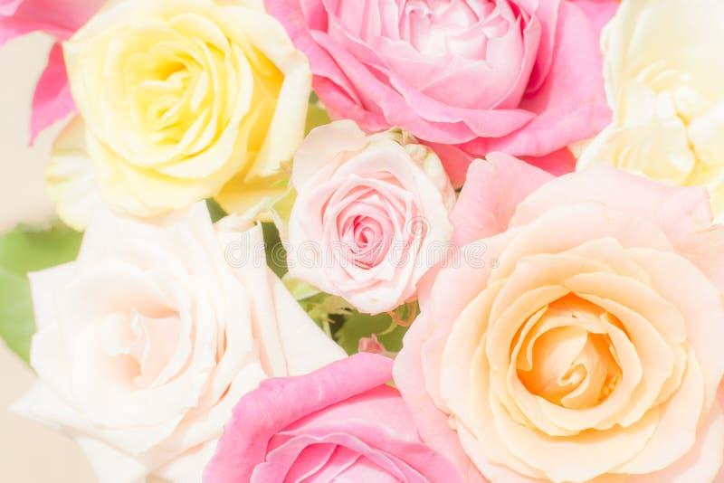 软的色的玫瑰梦想的花卉背景  免版税库存照片