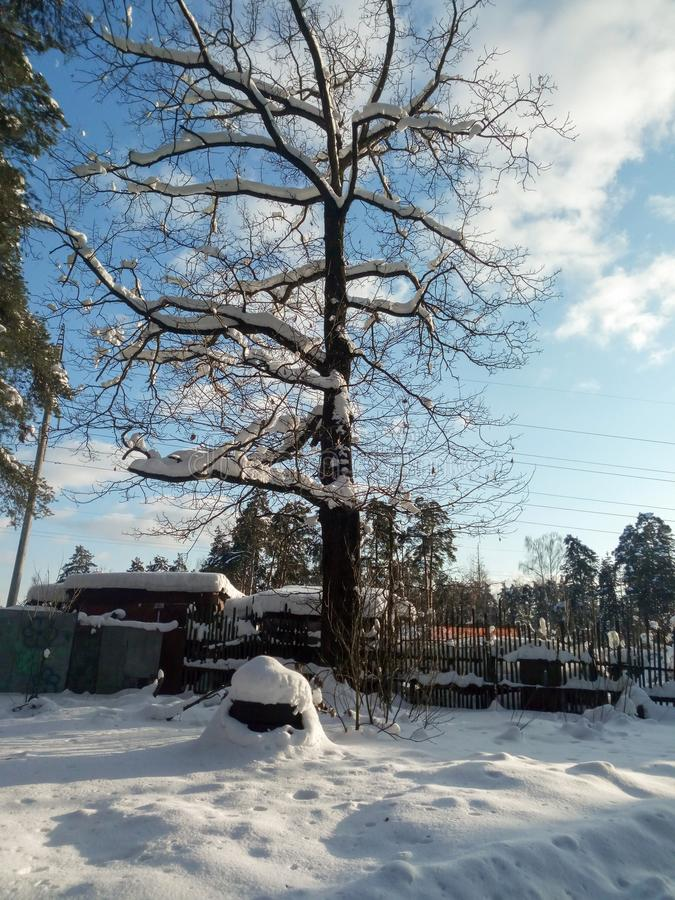 软的蓝天和高多枝树在欢乐雪穿戴在早晨阳光下 库存图片