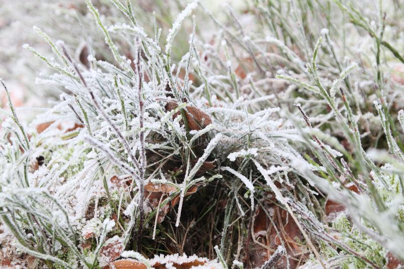 软的雪,掩藏在草之间 库存图片