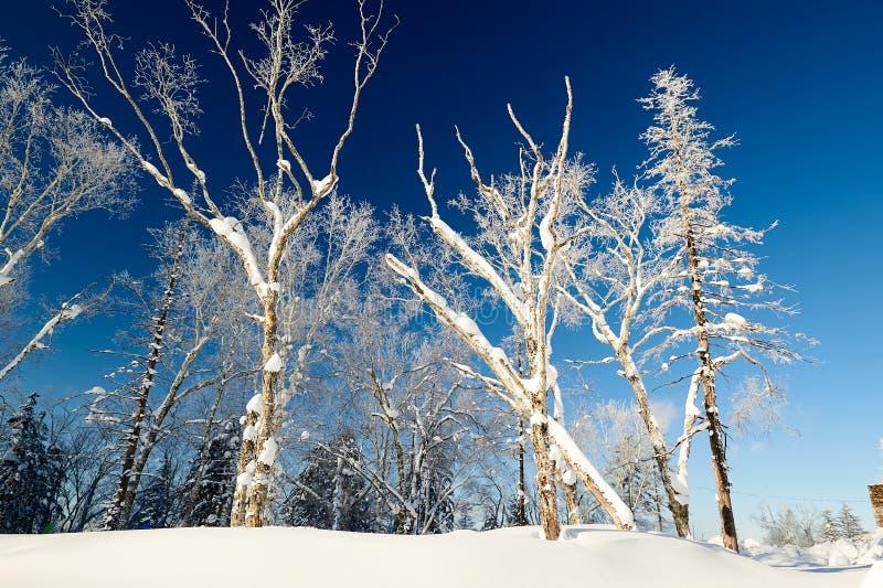 软的霜和蓝天雪scape 库存照片