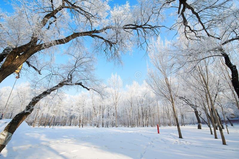 软的霜和蓝天 库存图片