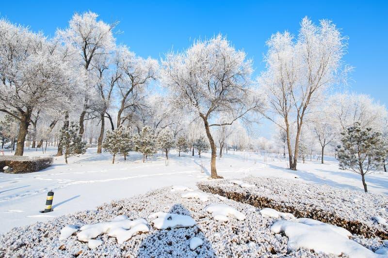 软的霜和雪风景 库存照片
