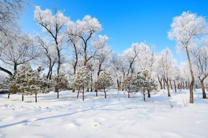 软的霜和雪风景 免版税库存照片