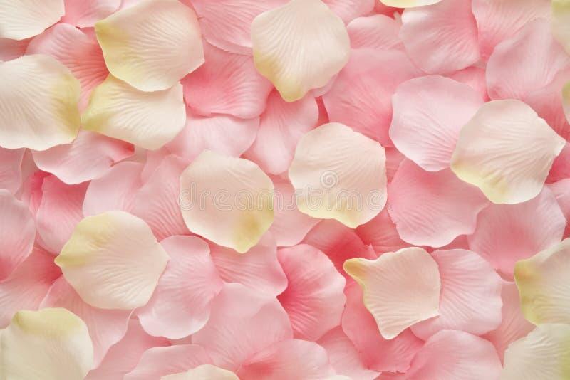 软绵绵地粉红色和空白玫瑰花瓣 库存照片