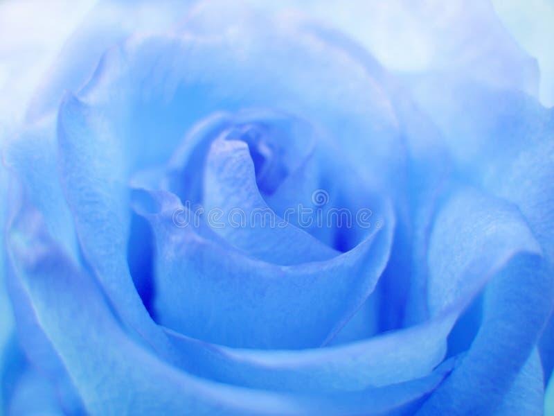 软蓝色的玫瑰 免版税库存照片
