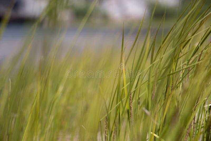 软软地被聚焦的草刀片临近池塘 图库摄影