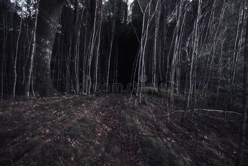 轻地画往恐怖在森林里 库存照片