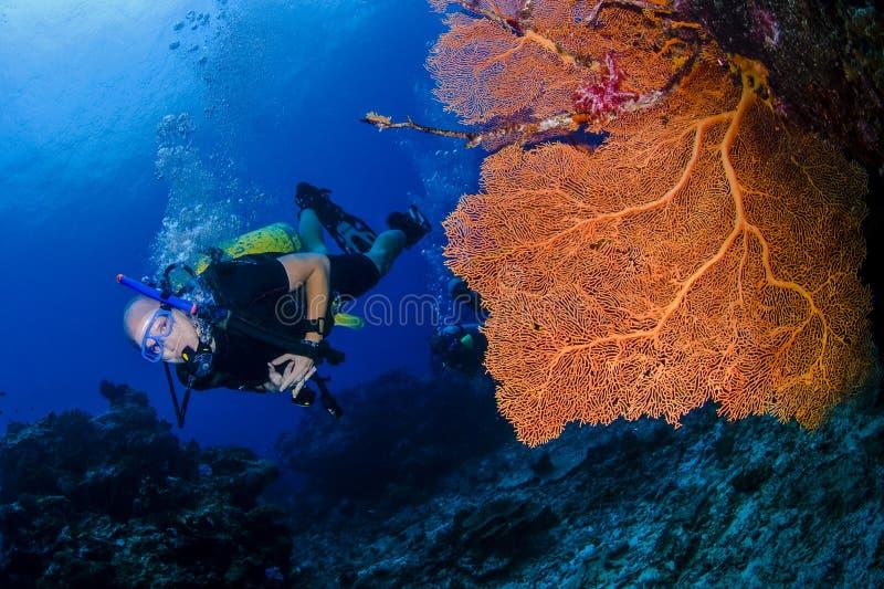 轻潜水员和橙色海底扇 库存图片