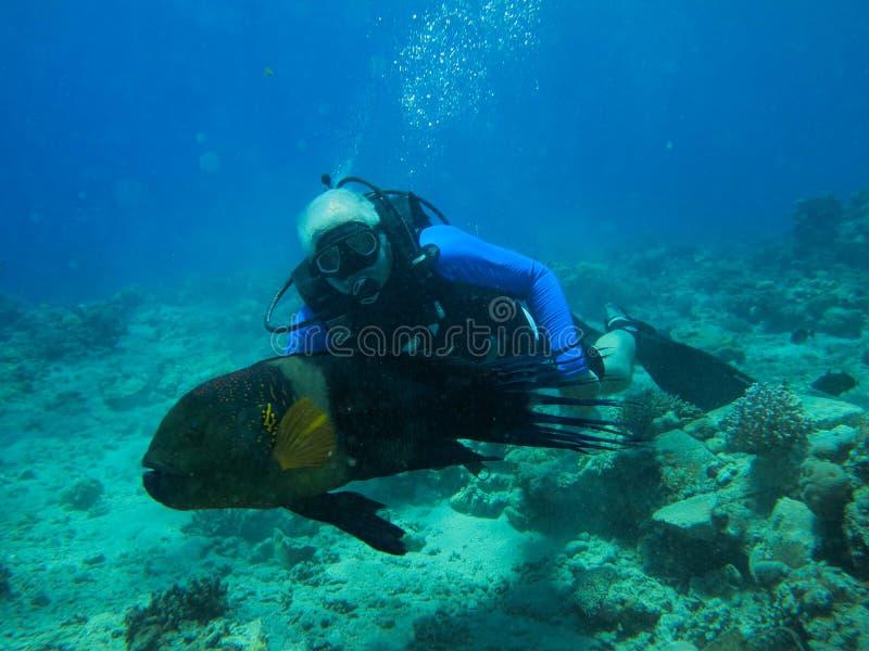 轻潜水员和鱼 库存图片