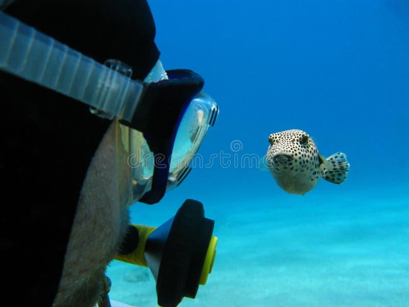 轻潜水员和pufferfish 免版税库存图片