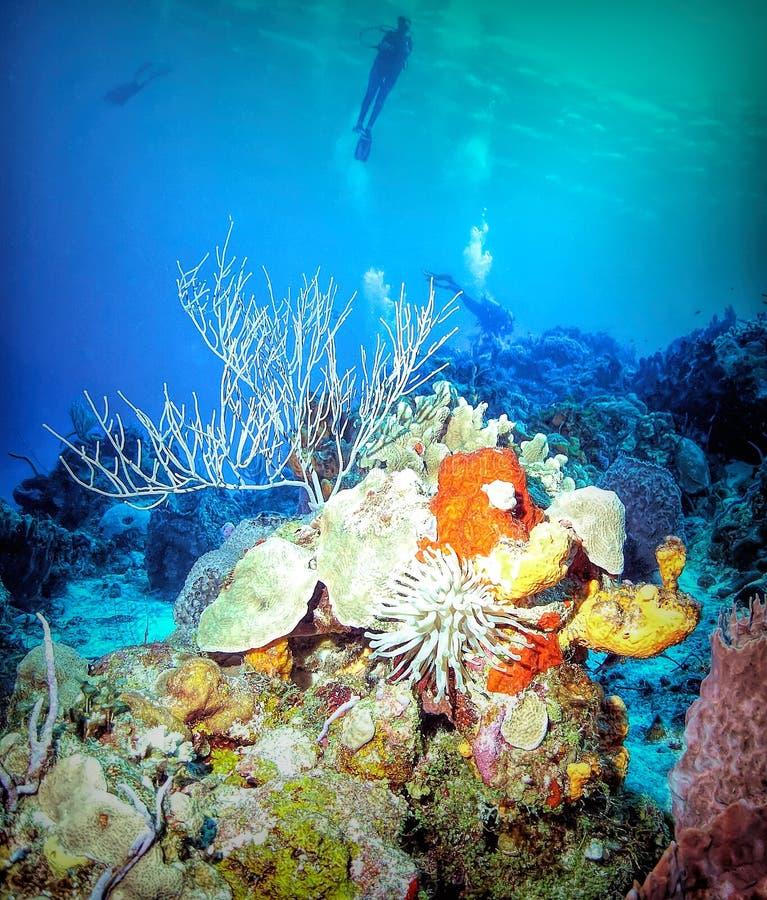 轻潜水员盘旋在活泼的珊瑚礁 库存照片