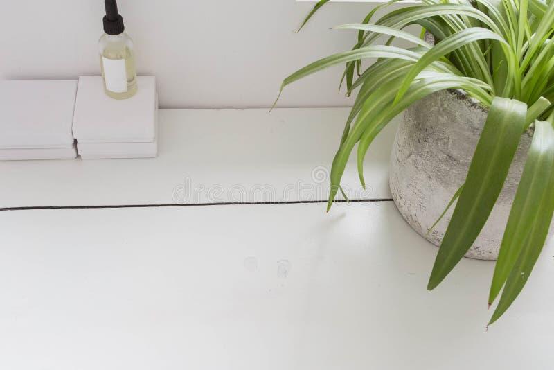 轻的木纹理桌有绿色室内植物顶视图 图库摄影