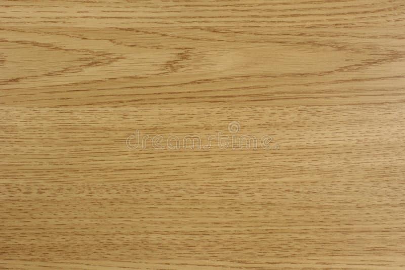 轻的橡木 免版税库存照片