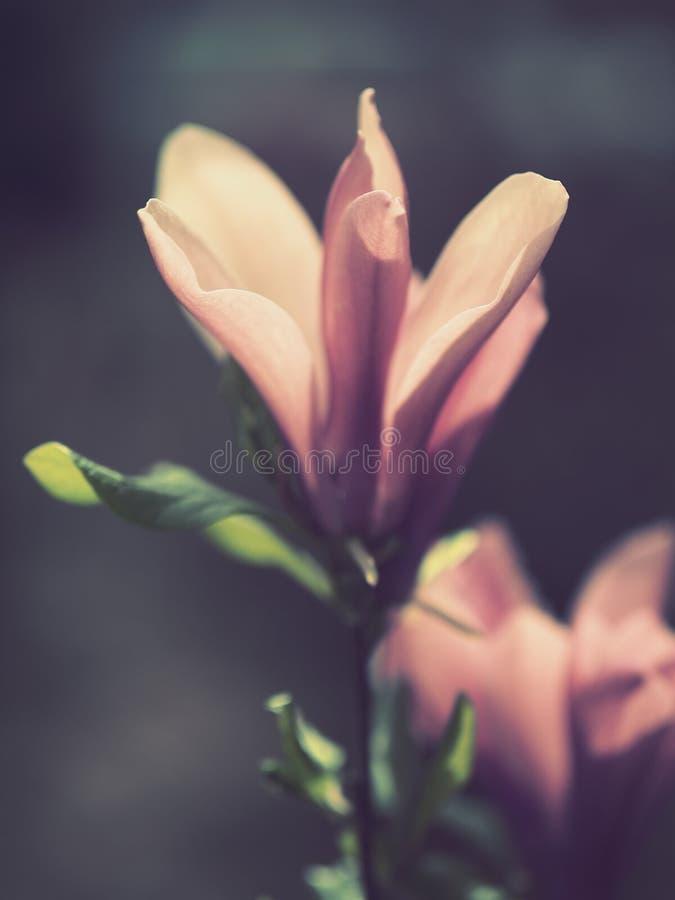 轻的温暖的有颜色的桃红色花 库存照片