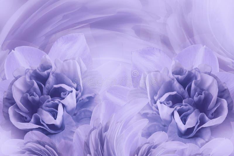 轻轻地narcissuses浅紫色的花春天背景  特写镜头 库存照片