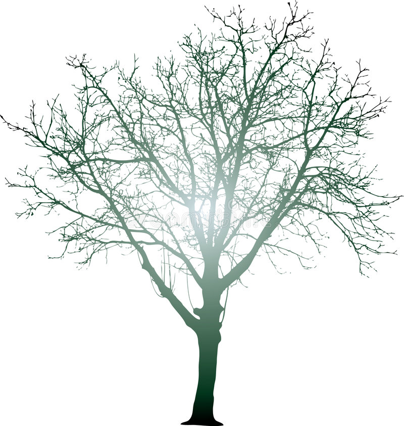 辐形结构树 库存例证
